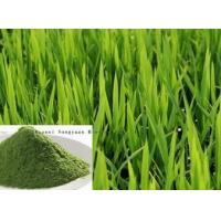 Buy cheap Barley Grass Extract, Wheat grass Extract from wholesalers