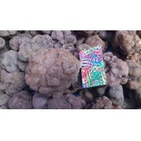 Wholesale wild edible fungus Truffle from china suppliers