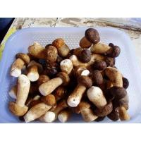 Buy cheap wild edible fungus Fresh Porcini from wholesalers